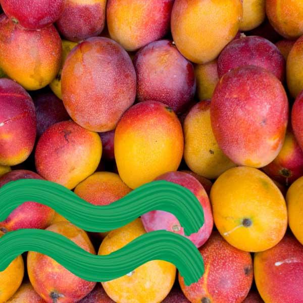 Bunch of mangos